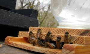 Поилка для пчёл: как сделать поилку из пластиковой бутылки и других подручных материалов своими руками, фото, видео