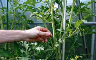 Пасынкование помидоров в теплице и открытом грунте: схема, видео, фото