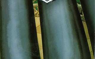 Баклажан Илья Муромец: описание и характеристика сорта, фото