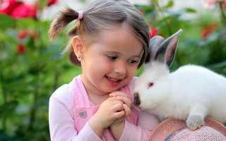 Аллергия на кроликов: может ли быть, симптомы, как проявляется у ребёнка и взрослого, фото
