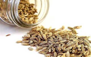 Семена петрушки: лечебные свойства и противопоказания, использование в народной медицине и кулинарии, фото