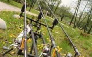 Сазан в Московской области: рыбалка на сазана в Подмосковье, где водится и где можно ловить платно и