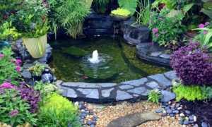 Разновидности чаш для садового пруда: какую лучше взять, какого размера