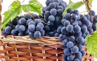 Вино из винограда Молдова: как сделать в домашних условиях своими руками, пошаговый рецепт приготовления