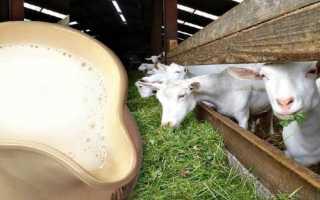 Сколько в среднем дает коза молока в сутки – надои после окота