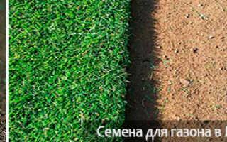 Расход семян газонной травы на 1 м²: норма высева на 1 сотку, на сколько хватает мешка, нормативы