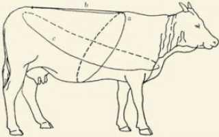 Бонитировка КРС молочного и мясного направления – инструкция