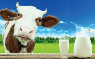 Сколько корова даёт молока в сутки, в литрах, норма после отёла
