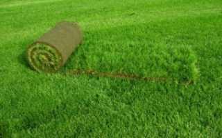 Устройство рулонного газона: как уложить своими руками, пошаговая инструкция, технология укладки газонной травы