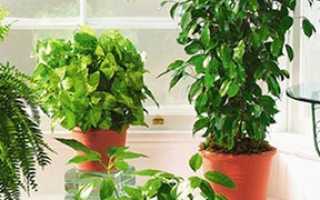 5 основных секретов ухода за домашней растительностью
