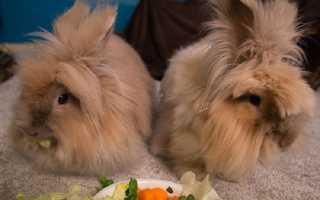 Что едят карликовые кролики: разрешенные и запрещенные корма, особенности кормления