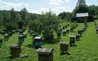 Пчеловодство: самоделки и приспособления своими руками, видео