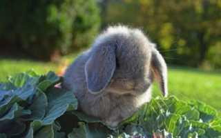 Кролик не ест: перестал пить и есть, в чём может быть причина, что делать и как вылечить?