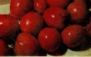 Томат «Де Барао»: характеристика и описание сорта, фото, урожайность, выращивание