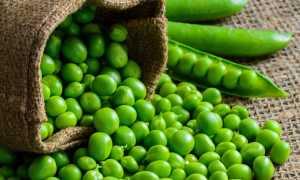 Как сохранить зелёный горошек на зиму дома: оптимальные условия, основные правила, сроки