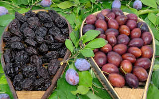 Чернослив и слива: в чём разница, основные отличия