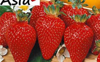 Клубника Азия: описание и характеристика сорта, агротехника выращивания и уход, фото, отзывы