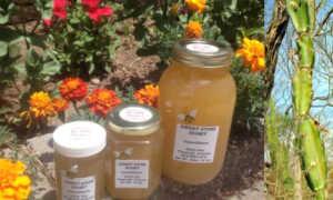 Мёд из верблюжьей колючки: полезные свойства и противопоказания, правила и нормы употребления