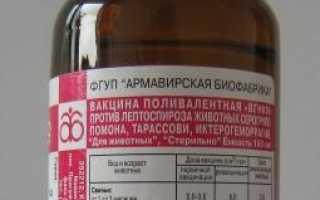 Лептоспироз КРС: диагностика, симптомы и лечение, вакцина, инструкция