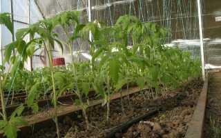 Как правильно подвязывать помидоры в теплице: способы подвязки, пошаговое руководство, фото, видео