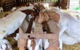 Сарай для козы своими руками: как построить, чертежи и размеры, фото