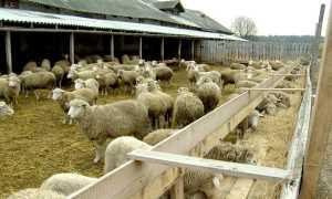 Овечий навоз и перегной как удобрение для огорода: применение на даче, польза и вред
