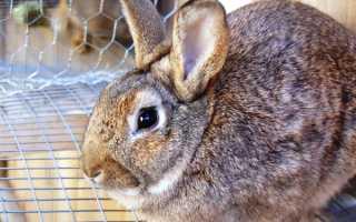 Понос у кроликов – причины и лечение болезни в домашних условиях