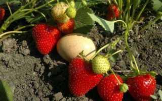 Ампельная клубника: уход и выращивание, описание и характеристика сортов, что это такое