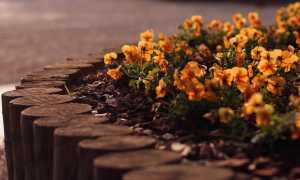 Садовые бордюры для дорожек и клумб: как сделать из дерева и кирпича своими руками, как установить и