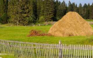 Откорм КРС: виды, и технологии выращивания, рацион питания, состав кормов, факторы влияющие на успех