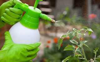 Сыворотка от фитофторы на помидорах: как приготовить раствор и правильно обработать, отзывы