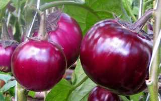 Баклажан Буржуй: описание и характеристика сорта, выращивание, советы по приготовлению, фото