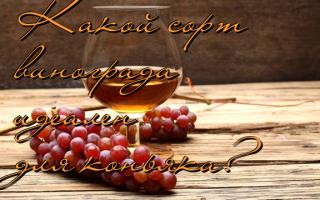Выбор лучшего сорта винограда для коньяка: описание, выращивание, процесс изготовления