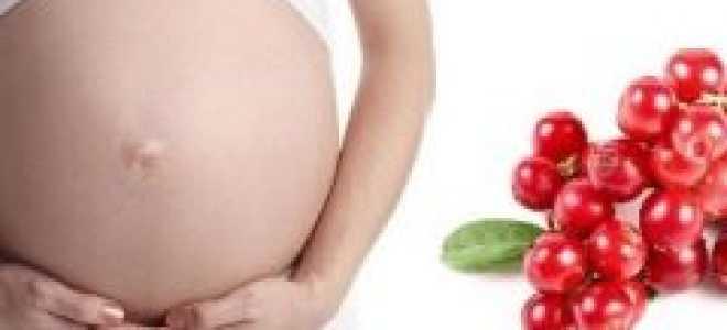 Клюква при беременности: можно ли есть на ранних и поздних сроках, полезные свойства и противопоказания