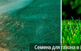 Жидкий газон (гидропосев): что такое наливной газон, как сделать своими руками на даче, что входит в его