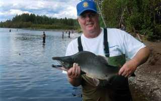Снасть на горбушу на Сахалине и Кольском полуострове: блесна, поплавочная оснастка для ловли, какой крючок нужен