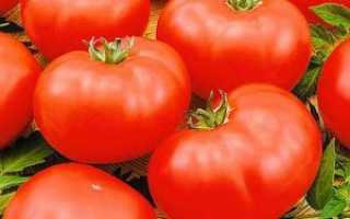 Томат Чудо рынка: характеристика и описание сорта, урожайность, выращивание и уход, фото
