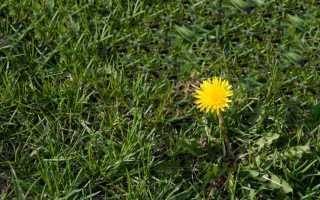 Средство от сорняков на газоне: как убрать подорожник с травы, как бороться с помощью гербицидов избирательного действия,