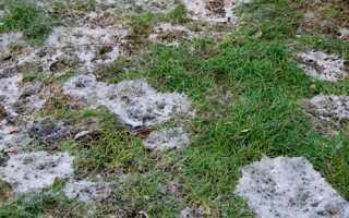 Ржавчина на газоне и как с ней бороться, чем обрабатывать от мучнистой росы и фузариоза, чем лечить