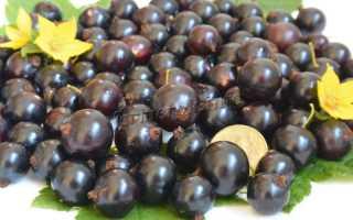 Ранний сорт крупноплодной чёрной смородины Валовая: описание сорта, фото