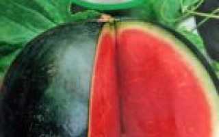 Выращивание арбузов в Подмосковье (в открытом грунте и в теплице): ТОП лучших сортов для посадки, особенности посадки