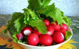 Какие витамины присутствуют в редиске: химический состав и полезные свойства