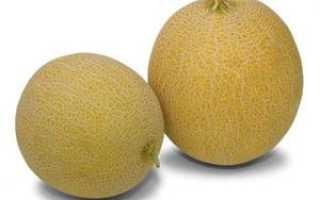 Дыня Колхозница: калорийность, фото, описание, выращивание в открытом грунте, польза и вред