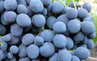 Виноград «Страшенский»: описание сорта, фото, отзывы