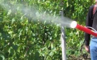 Железный купорос для винограда: как разводить раствор и как правильно обрабатывать, пропорции, использование против болезней