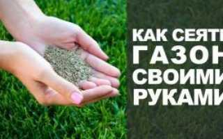 Газон на даче: как правильно сделать своими руками, пошаговая инструкция посадки газонной травы, поэтапное обустройство на участке