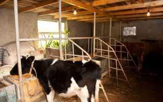 Кормушки для коров (в сарае, на пастбище): как сделать своими руками, размеры, виды и типы моделей, фото,