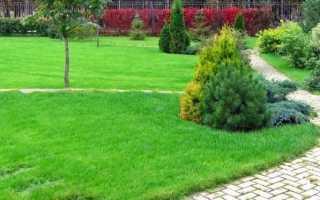 Овсяница красная для газона: описание газонной травы, смесь с мятликом луговым, отзывы, фото