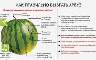 Употребление арбуза для похудения: особенности, можно или нельзя есть на ночь