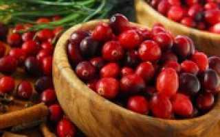 Что такое клюква: кустарник или травянистое растение, основные характеристики, внешний вид, цветы, вкус и вид ягод, фото